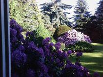 Garten der Pension Franz im Sommer