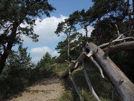 Die Küstenwälder rund um Zinnowitz sind ein schönes Ziel für ausgedehnte Spaziergänge
