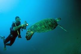 Urlaubsaktivitäten unter Wasser