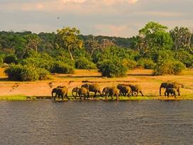 Elefanten-Herden