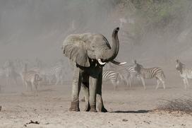 Sonnenschutz für Elefantenbabys